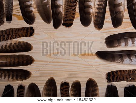 Many falconry feathers and space on light wooden background.