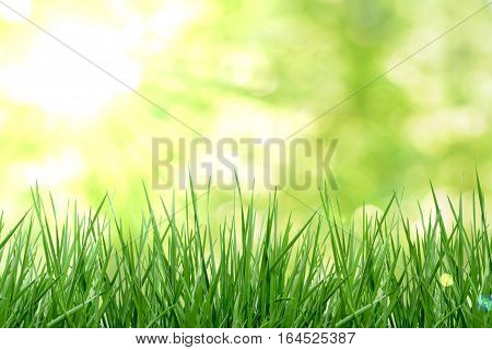 Green grass with sun and natual background