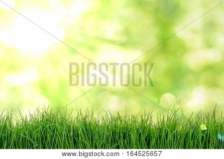 Green grass with sun on natual background