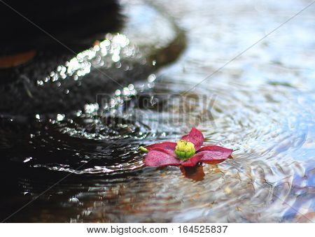 Pink flower floating with water splash in fountain water.