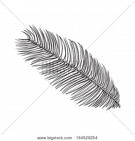 Full fresh leaf of sago palm tree, sketch style vector illustration isolated on white background. Realistic hand drawing of sago palm tree leaf, jungle forest design element