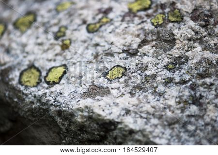 Green lichen grows on white and grey rock in the mountains.