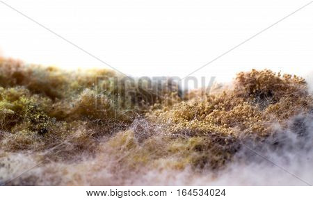 On the food (bread) a colony of mold. On a white background