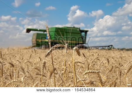 Kharkiv Ukraine - July 12 2011: Ears of wheat against the backdrop of a combine harvester on a field in sunny summer day in Kharkiv Oblast Ukraine on July 12 2011