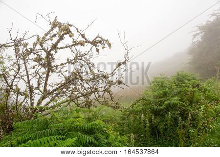 Fern and tree in a lichen in dense fog. Summer cloudy day in mountains dense fog plants after a rain in the foreground