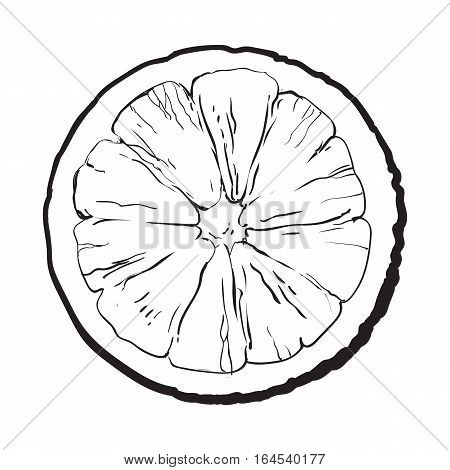 Orange cut in half, top view, sketch style vector illustration isolated on white background. Realistic black and white hand drawing of round slice of unpeeled orange