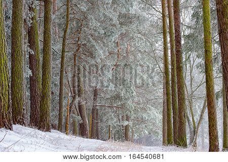 A very nice romantic winter forest with snow