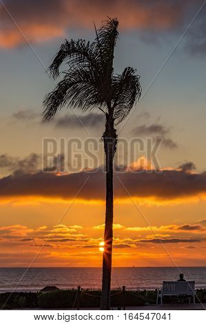 Single sunset palm with a figure sitting on a bench looking out to sea. Taken at Coronado Island in January or a person sitting on a bench looking out to sea during a beautiful sunset with one palm tree in silhouette beside them with the sun's broken rays