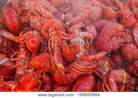 Freshly boiled lobsters. Street food lobster festival. Sea food