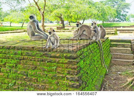 The Monkeys In Garden