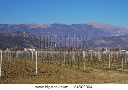 Vineyard In The Prealpi Venete Below Mt.visentin