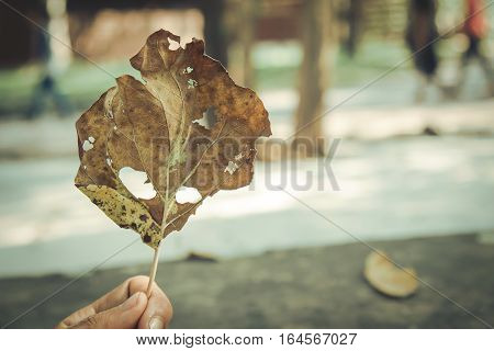 Dry yellow leaf in winter season on hand