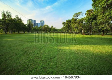 beautiful morning light in public park with grass field and green environment use as backgroundbackdrop