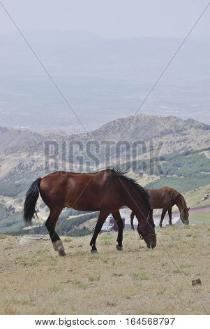 Horses In Sierra Nevada, The Highest Peaks Of Inland Spain.