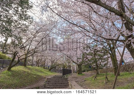 Keage incline with sakura (cherry blossoms) Kyoto Japan.