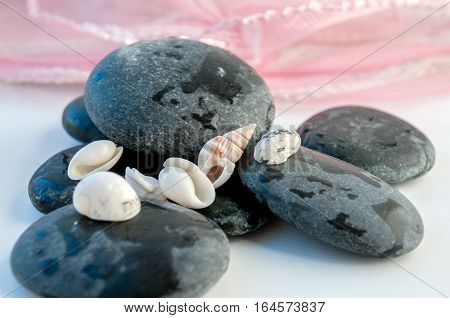 Large Round Stones And Seashells On A Pink Background  Большие круглые камни и морские ракушки на ро