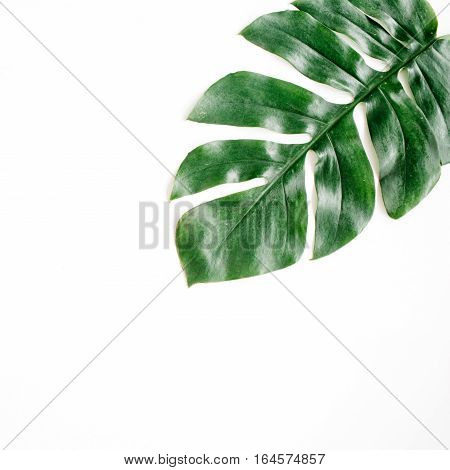 Tropical palm leaf. Flat lay top view
