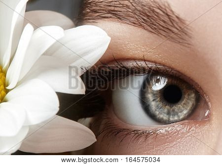 Close-up macro of beautiful female eye with perfect shape eyebrows. Clean skin fashion naturel make-up. Good vision. Spring natural look with chamomile flowers.