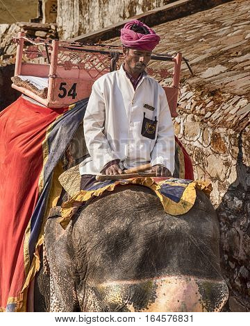 AMER, INDIA - NOVEMBER 18, 2016: An elephant rider or mahout guides his elephant down the path from the Amber Fort in Amer, India to the courtyard to pick up another group of tourists.