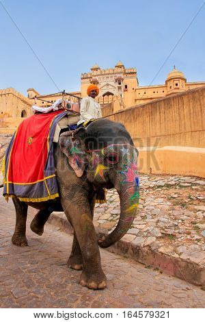Amber, India - March 1: Unidentified Man Rides Decorated Elephant From Amber Fort On March 1, 2011 I