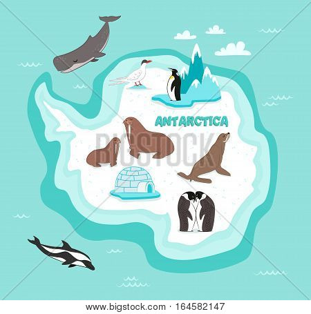 Antarctic continent map with wildlife animals vector illustration. Dolphin, sperm whale, emperor penguin, seal, walrus in cartoon style. Antarctic snowbound continent with wild animals. Cartoon animals collection. Different animals for zoo poster