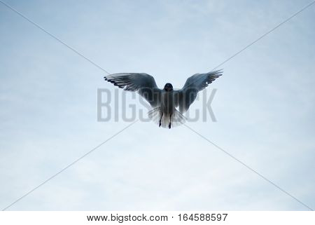 the seagull flying on the sky aerialists havatum on the fly