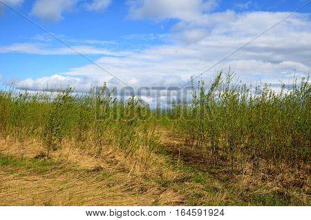 Fields near the garden in the morning Russia