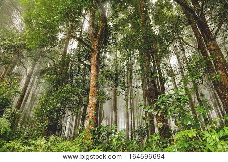 Evergreen jungle forest after rain. Natural misty background. Bali Indonesia.