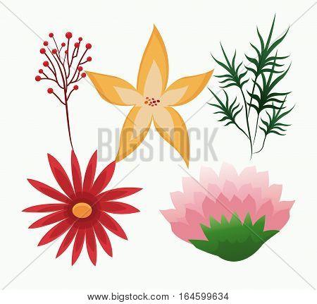set flowers delicate foliage leaves botany vector illustration eps 10