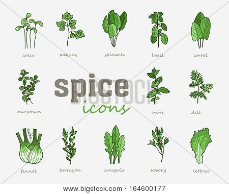 Greenery vector icon. Vegetable green leaves. Culinary herb spice for cooking, medical, gardening design. Organic product flavor ingredient for label, sign, illustration