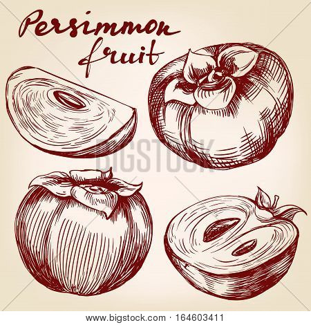 fruit persimmon set hand drawn vector illustration realistic sketch