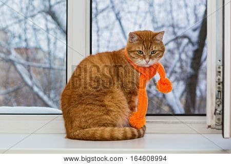 Red pet cat in an orange scarf sitting on a window sill