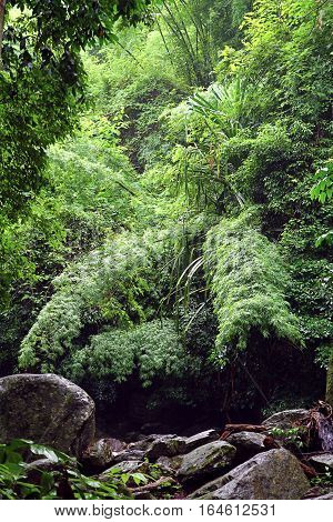 thick tropical jungles, powerful wall with natural light on a rainy day