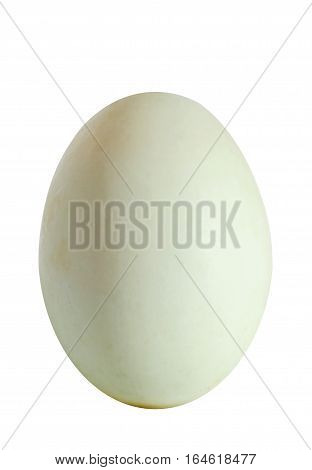 Big Green Duck Egg, Isolated On White Background, Close Up