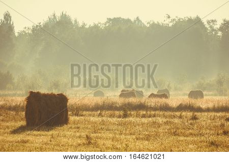 haystacks in the field, Novgorod oblast, Russia