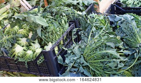Genuine Green Broccoli Northern Italy Called Broccolo Fiolaro