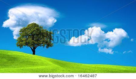 Baum auf der grünen Wiese