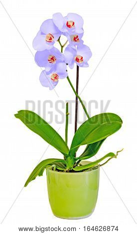 Mauve Orchid Flowers In A Green Vase