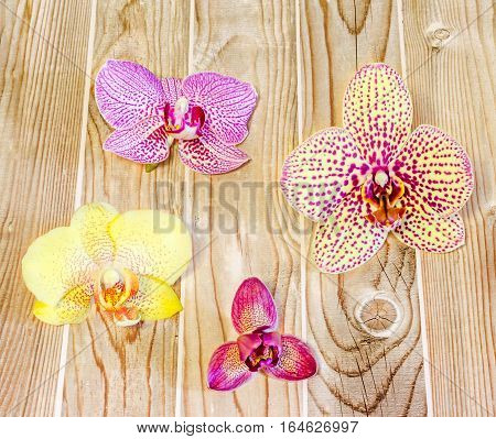 Many Types, Collection Of Orchids Flowers