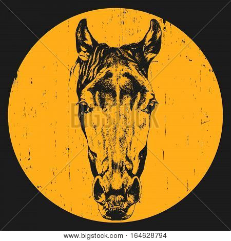 Portrait of Horse. Hand drawn illustration. Vector