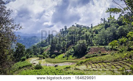 Ella landscape paddy field, Uva province, Sri Lanka