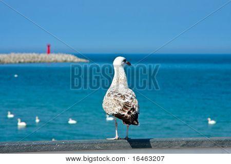 Tern looking at open sea