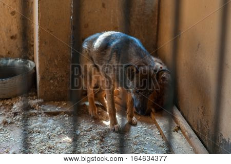 Homeless dog sitting in a dirty cage at the shelter