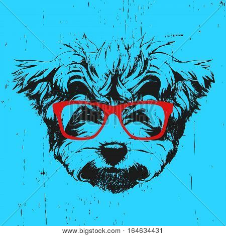 Portrait of Maltese Poodle with glasses. Hand drawn illustration. Vector.