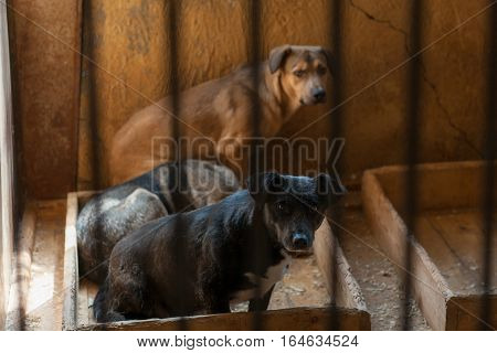 Three homeless dogs sitting in a dirty cage at the shelter