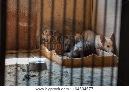 Sad homeless dogs sitting in a dirty cage at the shelter