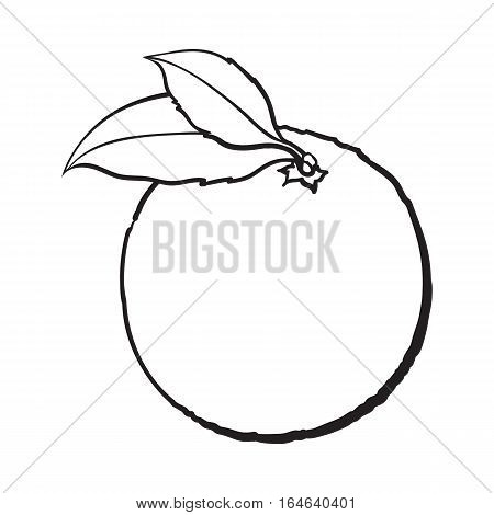 Realistic colorful hand drawn ripe, unpeeled orange with green leaves, sketch style vector illustration isolated on white background. black and white Hand drawing of fresh whole orange