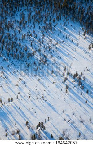 Aerial view of the some trees with long shadows in winter tundra.