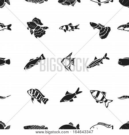 Aquarium fish pattern icons in black style. Big collection of aquarium fish vector symbol stock