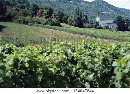 Summer Vineyards and church village near St jean de chevelu in Savoy France